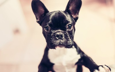 Things Pet Owners Should Consider When Apartment Hunting